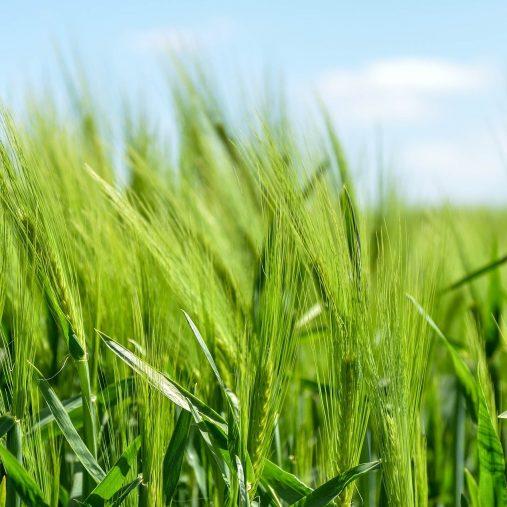 agricultura de precision iot nettra